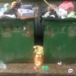 Современные технологии в помощь: «мусорная» реформа решила главную задачу