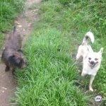 Проблему бездомных животных намерены решить в Приморье