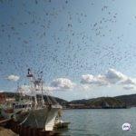 160 трупов: шокирующая картина открылась жителям острова на берегу