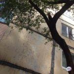 Может рухнуть в любой момент: опасное дерево угрожает жильцам