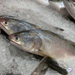 В тоннах рыбы – смертельный яд: продукция известной компании оказалась с «начинкой»