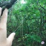 На  скотче: в лесу найден примотанный к дереву труп