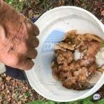 «Что за чудо такое?»: необычный гриб пытаются опознать жители Приморья
