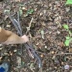 «Напомнило фрагменты из фильма ужасов»: жители Приморья решили погулять в лесу, а зря