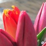 «Хвост из пряжи»: женщины признались, чем их удивляли на 8 марта