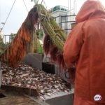 На грани войны: Китай угрожает России из-за одной партии рыбной продукции