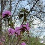 Потепление начнется в Приморье: синоптики озвучили точную дату