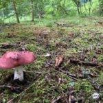 «Угрозу представляют выделения»: некоторые съедобные грибы стали опасными