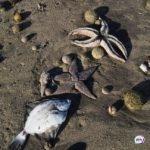 Названа основная версия загрязнения залива на Камчатке – Следком