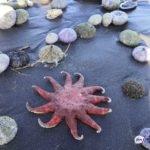 Масштаб велик: массовая гибель животных обнаружена еще на двух пляжах