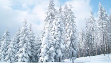 Снежная неделя