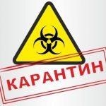 В Приморье объявлен карантин из-за чумы животных