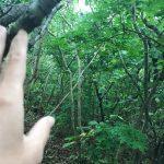 Заставила понервничать: пропавший младенец найден в лесу