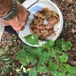 «Китайцы очень ценят – хорош для потенции»: приморцы просят опознать найденный гриб