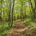 Пятилетняя девочка трое суток выживала в лесу