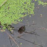 Трехлетний мальчик, пропавший в лесу, найден в болоте