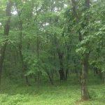 Появился новый поворот в истории с ушедшей в лес семьей