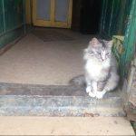 6 удивительных признаков того, что кошка действительно вас любит