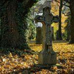 Медведь утащил покойника с кладбища