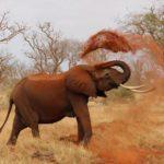 Невероятные факты о животных, которых вы не знали