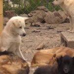 Необычная стая бродячих собак появилась в городе