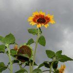 Выяснилось, что будет с погодой в Приморье дальше