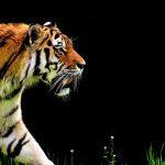 И кто здесь настоящий зверь? - человека учат соблюдать осторожность