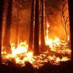 Очередного пиромана задержали в лесополосе Приморья