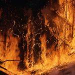 «Такого лета не может быть»: депутат озвучил причины страшных  пожаров и мощных ливней