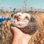 Улыбающийся ёж «взрывает» Instagram