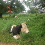 Отравления, расстройства,  ангина: молоко приморского  производителя пока лучше не пить