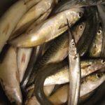 Как соглашения ВЭФ поменяют аквакультуру