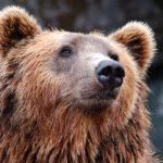 Мясо медведя оказалось крайне опасным для человека