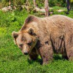 Медведь напал на молодую женщину темной ночью