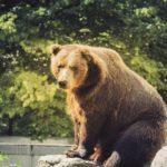 Уникальные кадры удалось снять благодаря любопытному медведю