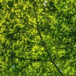 Приморье начнут активно озеленять