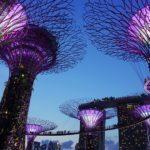 Может появиться прямое авиасообщение между Сингапуром и Владивостоком