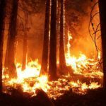 Пожар на трех гектарах: пламя бушует в заповеднике
