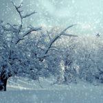 До минус 5: дату первого  снега в Приморье озвучили синоптики