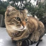 Кота с необычными приметами ищет Минтуризма Чечни
