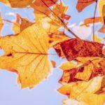 Порадует ли погода жителей Приморья, уточнили синоптики