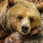 Медведица напала на людей прямо на трассе