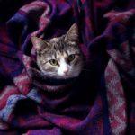 Благотворительная выставка-раздача кошек проходит в центре