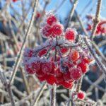 Когда ударят морозы, узнали синоптики