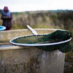 Необычный эксперимент с рыбой запустят в российском регионе