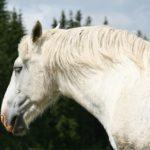 Впечатлил любимую: «принц» на белом коне может сесть на пять лет