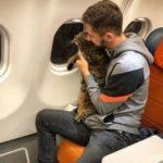 Толстый кот меняет правила? За «Аэрофлот» взялась Госдума