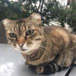 Трагедия: кот задушил грудного  ребенка