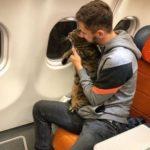 Выдыхай, Аэрофлот. Знаменитый кот Виктор  готовится к очередной поездке