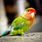Женщина вызвала полицию из-за жалобных криков попугая